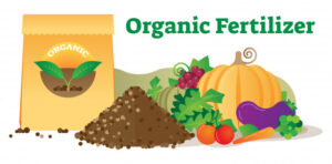 organic agriculture farming business